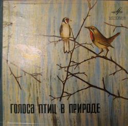 Голоса птиц в природе