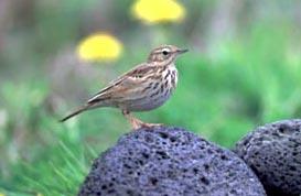 Звуки птиц mp3